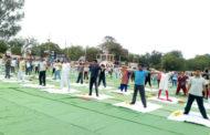 विश्व योग दिवस, एनवायके ने की सहभागिता
